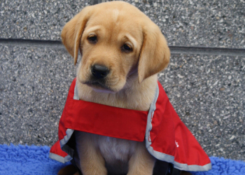 a puppy in red coat
