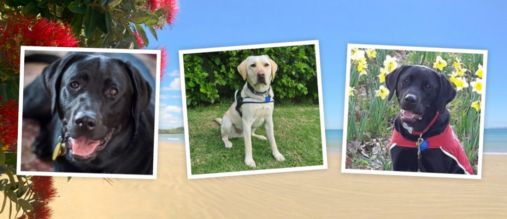 Three puppies photos with beach background